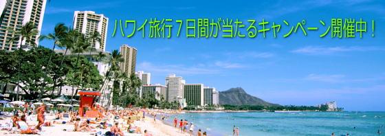 hawaii旅行を当てよう